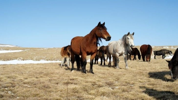 Photo Safari – Wild Horses